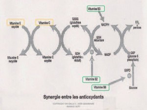 Synergie entre les oxydants