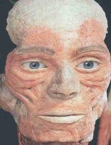 Musculature de face