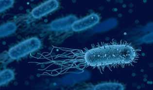 bacterie intestinale